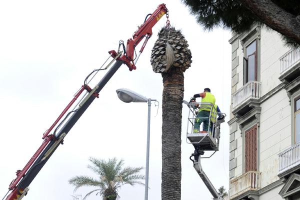 taliata palma.jpg
