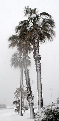 neve in Genova.jpg