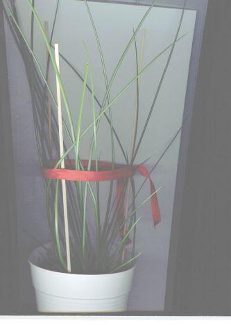 papirus(sit).jpg