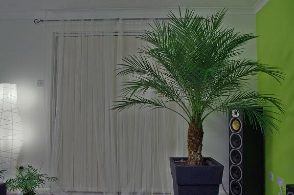 palm1.jpeg