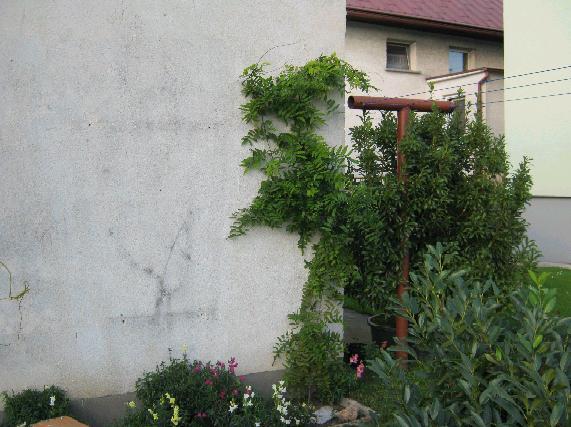 wisteriarozmaryn.jpg