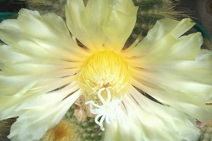 kwiat2a.jpg