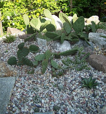 kaktusy12007.jpg