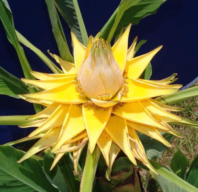kwiat.jpg