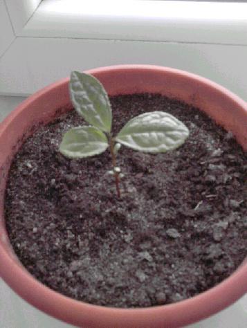 herbata12.jpg