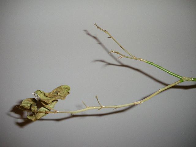 cytryna.jpg