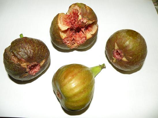 figa owoc.jpg