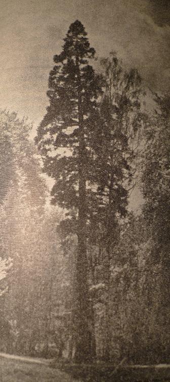 Mamutowiec z Glinnej 1955r.JPG