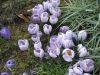 wiosna i 022.jpg