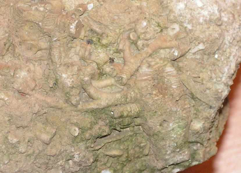 koral2_2.jpg