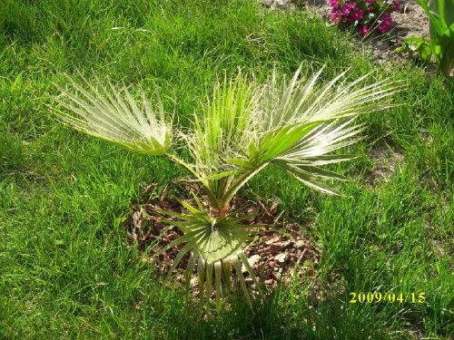 palmywogrodzie3.jpg