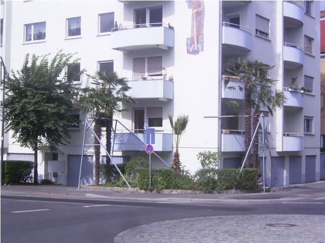 trachcarpusyzniemiec.JPG