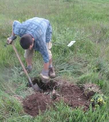 pierwsze drzewko.JPG