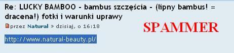 spammer2.JPG