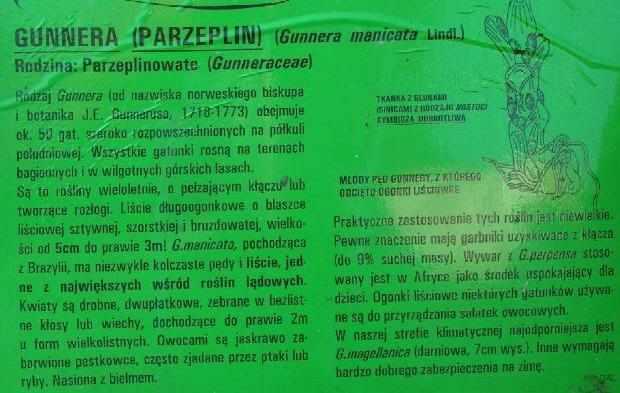 gunnera22_2.jpg