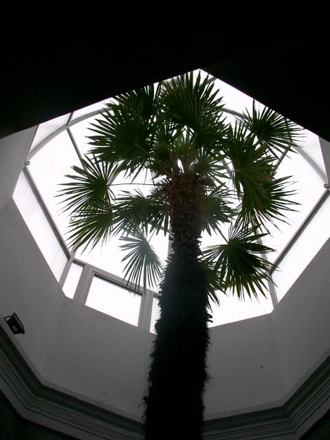 stara palma.jpg