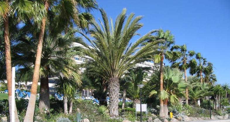 palm kal.jpg