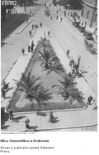 palmy w krakowie.JPG