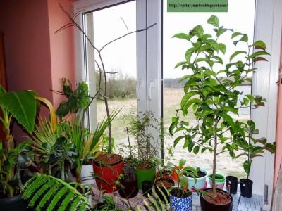 Okno z roślinami.JPG