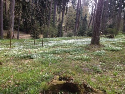 Arboretum Kudypy 008 (Kopiowanie).jpg
