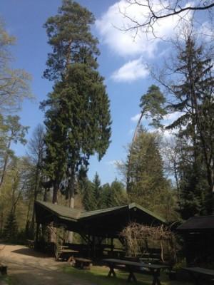 Arboretum Kudypy 016 (Kopiowanie).jpg