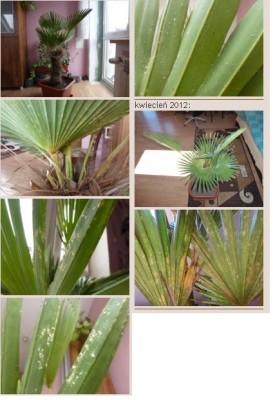 zdjęcia palmy kamil22.JPG
