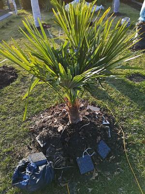 Palmy w lutym 003.jpg