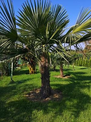 Rośliny egzotyczne 003.jpg