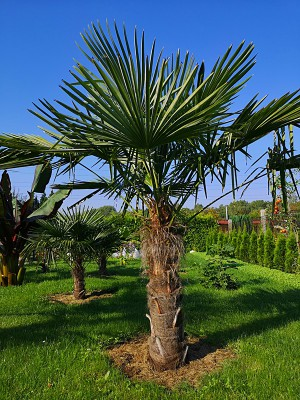 Rośliny egzotyczne 004.jpg