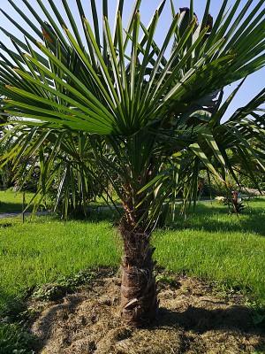 Rośliny egzotyczne 005.jpg