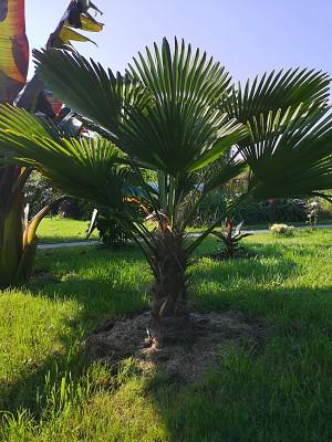 Rośliny egzotyczne 006.jpg