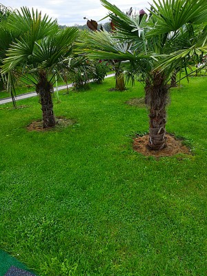 28-09-ogród 001.jpg