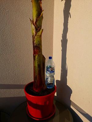 Bananowiec i inne 020.jpg