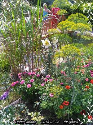 Ogród 26-07-18r 001.jpg