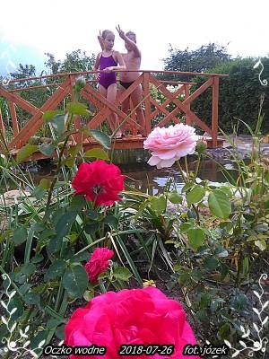 Ogród 26-07-18r 008.jpg