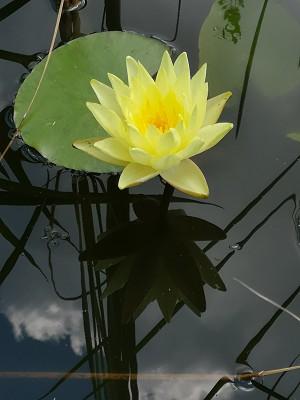 Aktinidia, kaktusy, lilia 019.jpg